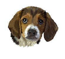 Puppy Love Beagle Portrait Photographic Print