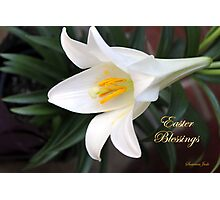 The Easter Lily ~ a Biblical Flower Photographic Print