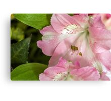 Flower blossom Canvas Print