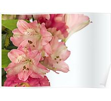 Flowers petals on a white background Poster