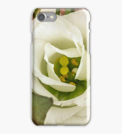 One big rose iPhone Case/Skin