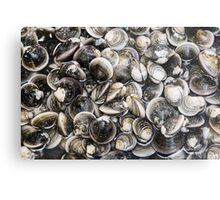 Fresh Clams Metal Print