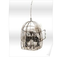 Baby Owl Sitting In a Birdcage Poster