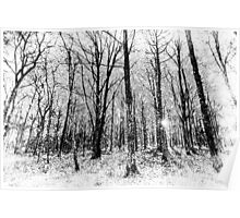 Monochrome Snow Forest Art Poster