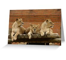 The three lionesses Greeting Card