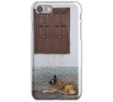 Brown Dog Next to a Window iPhone Case/Skin