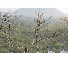 Monkeys In Sri Lanka Photographic Print