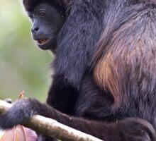 Howler monkeys - Costa Rica Sticker