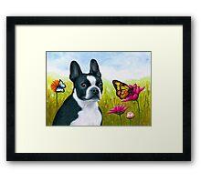Dog 134 Boston Terrier Framed Print