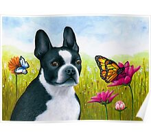Dog 134 Boston Terrier Poster