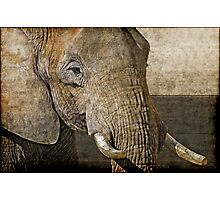 Big five: African elephant Photographic Print