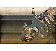 Big five: Rhinoceros Photographic Print