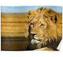 Big five: Lion Poster