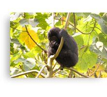 Gorilla Baby, Uganda Africa Metal Print