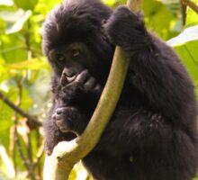 Gorilla Baby, Uganda Africa Sticker