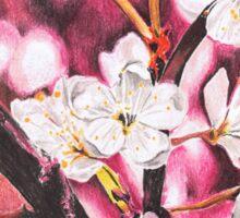 The Blossom of Cherry Sticker