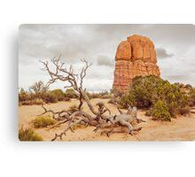 Fallen Tree - Arches National Park Canvas Print