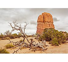 Fallen Tree - Arches National Park Photographic Print