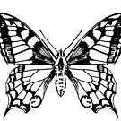 Swallowtail butterfly ink pen drawing by Sarah Trett