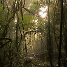 Forest Light by DarthIndy