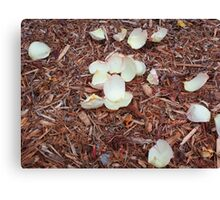 Rose Petals on Mulch Canvas Print
