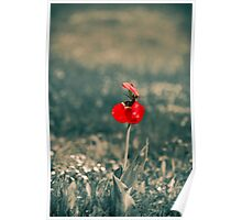 Lonely Red Flower Poster