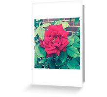 Flora, Flora, Flora Greeting Card