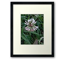 Clover Wakes Up! Framed Print