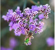 Flower Cluster with Green Bee Photographic Print