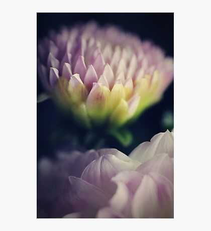 flower close up one Photographic Print