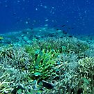 Reef Flat at Saru Namu-Namu Island. by Dr Andy Lewis
