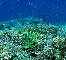 Reef Flat at Saru Namu-Namu Island. by Dr Andy Lewis