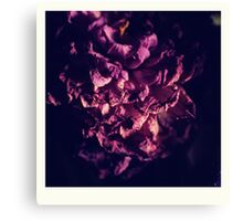 dry purple flower Canvas Print