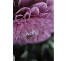 flower close up six Photographic Print
