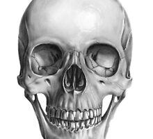 Skull by Milosz Wasowicz