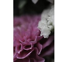 flower close up five Photographic Print