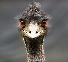 Emu by cs-cookie