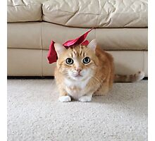 Cute cat with a bow Photographic Print