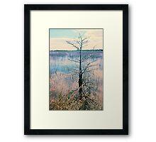 Shark Valley Cypress Framed Print