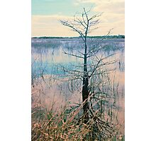 Shark Valley Cypress Photographic Print