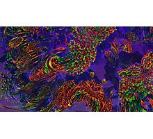 MAD CEILING DEEP Photographic Print
