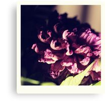 dry purple flower - 3rd Canvas Print