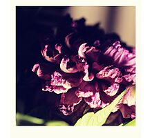 dry purple flower - 3rd Photographic Print