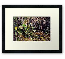 Nature's Garden Framed Print