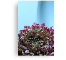 dry flower - one Canvas Print
