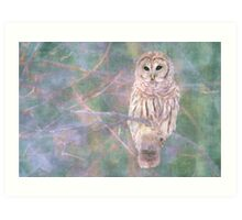 Barred Owl Pastel Oil Painting Art Print