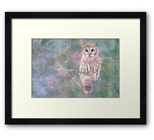 Barred Owl Pastel Oil Painting Framed Print