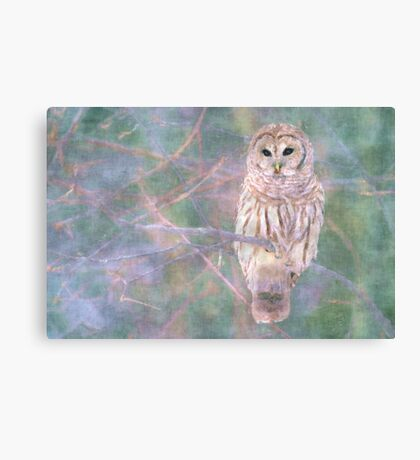 Barred Owl Pastel Oil Painting Canvas Print