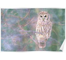 Barred Owl Pastel Oil Painting Poster