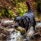 Playing in the stream by JFPhotography